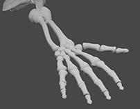 Sculpture 3D - Anatomy's Studies