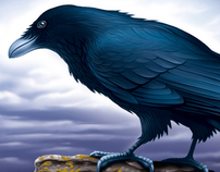 How to illustrate a Raven