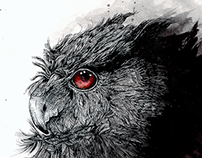 Wild dark owl