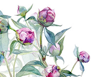Peonies | Watercolor