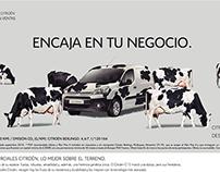 Gráficas Citroën concesionarios