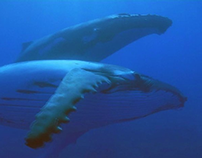 Let Whales Love - Greenpeace