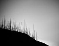 Burnt Tree Project