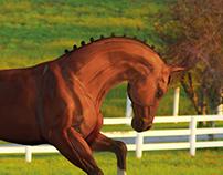 HORSE - Study, Digital Sculpting & Compositing