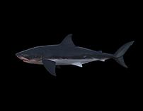 WIP - Shark Breach Animation