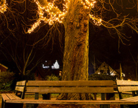 tree of advent