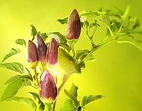 Saprogum Fertilizer by Zander Ukraine