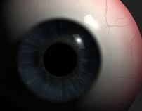 3D Modeling - Human Eye