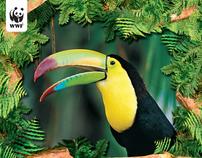 WWF / WNF Calendar