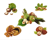 watercolor fruits, vegetables and nuts