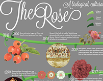 Infographic: History of the Rose
