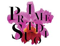 Prime Studio Identity