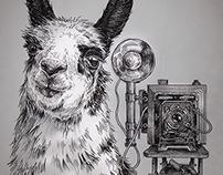 Llama Project