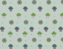 Cactus & suculentas - Branding