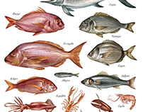 Aegean Fish Illustrations