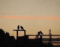Pair Pair, Love birds