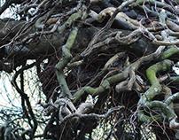 NZ Photography - An observation of texture