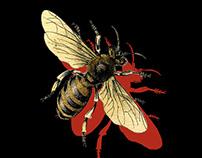 SUMMER NIGHTS - Bootleg Honeys