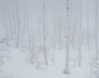 Snowy day white