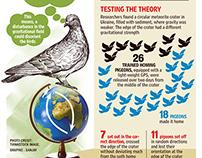 Birds brain