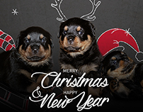 Rottweiler Christmas greetings card
