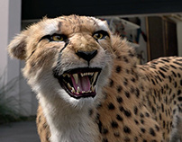 "Mazda CX-5 ""Cheetah Returns"""