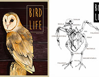 Bird Life Cover Illustration