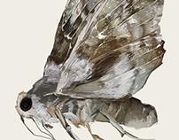 mood: moth
