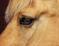 Just horses 2