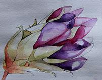 Flor y flor