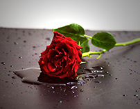One Rose many Lovers