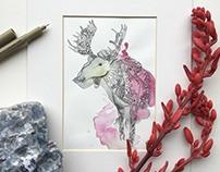 Animal Illustrations / Watercolor