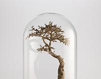 Bonsai trees - Cardboard