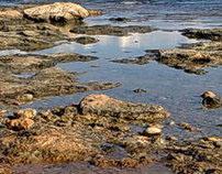 Photos of the Sea