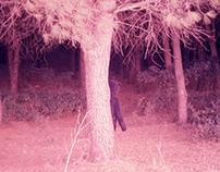 Fantasma di un orso nel bosco.