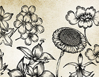 Hand Drawn Flowers Free Vector & Brush Pack