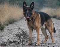 Dogphotography