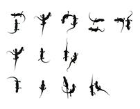 06 Newt Font(Japanese)
