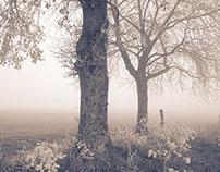 The Life of Trees III