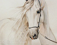 Andalusian horse watercolor painting