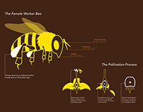 Infographics Campaign: The Honey Bee Meltdown