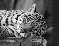 Zoo Life - Random Expressions