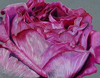 December drawing - Roses