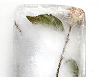 Frozen London Park Plants