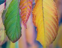 Opal Autumn