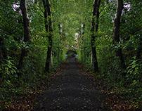 Symmetry in Trees