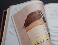 ECORATIO - Illustration & Editorial Design