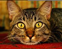 Romero Britto - Gato - Illustrator cs6
