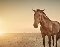 The Lusitanian Horse