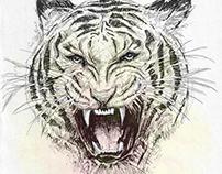 'Wild_Cat'